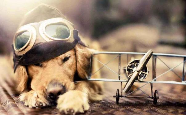 宠物托运一般多少钱宠物托运的流程介绍